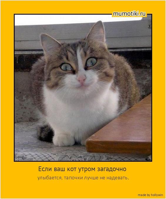 Если ваш кот утром загадочно улыбается, тапочки лучше не надевать. #мотиватор