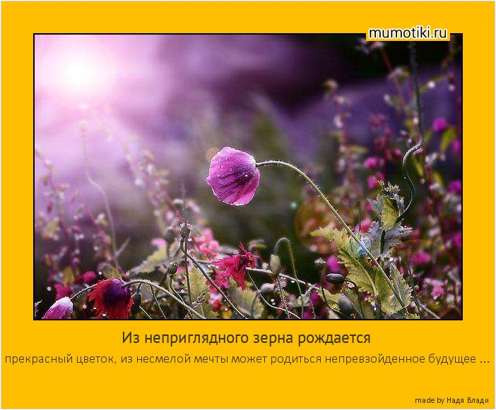 Из неприглядного зерна рождается прекрасный цветок, из несмелой мечты может родиться непревзойденное будущее ... #мотиватор