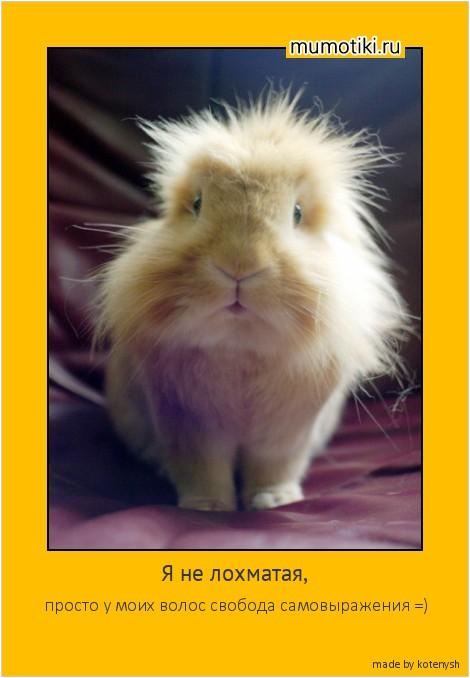 Я не лохматая, просто у моих волос свобода самовыражения =) #мотиватор