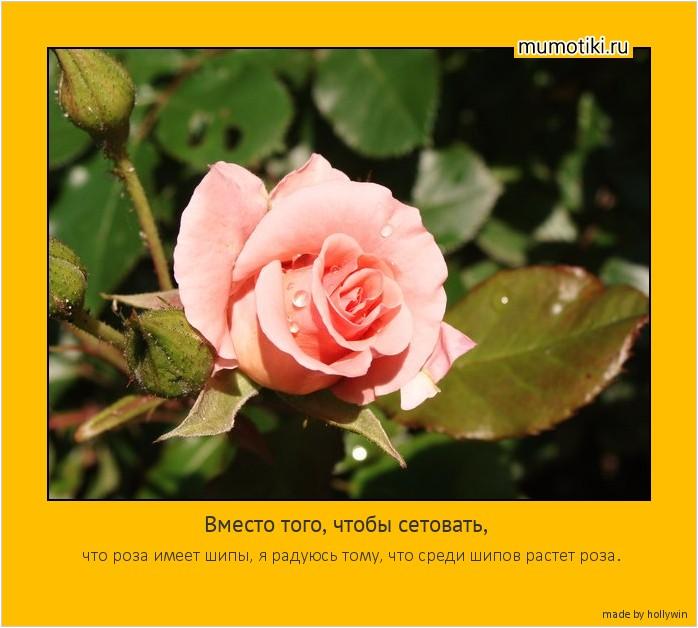 Вместо того, чтобы сетовать, что роза имеет шипы, я радуюсь тому, что среди шипов растет роза. #мотиватор