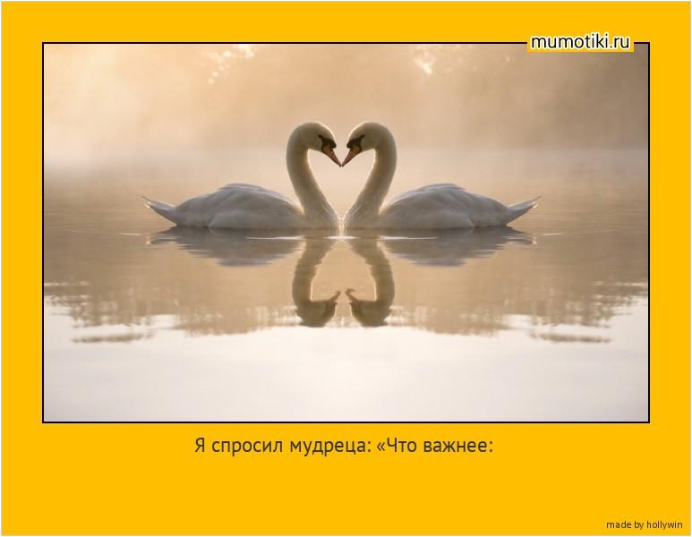 Я спросил мудреца: «Что важнее: любить или быть любимым?» Мудрец ответил: «Что для птицы важнее: левое крыло или правое?» #мотиватор