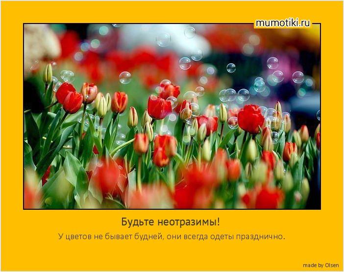 Будьте неотразимы! У цветов не бывает будней, они всегда одеты празднично. #мотиватор