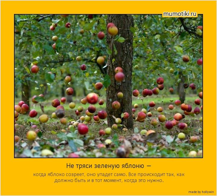 Не тряси зеленую яблоню — когда яблоко созреет, оно упадет само. Все происходит так, как должно быть и в тот момент, когда это нужно. #мотиватор