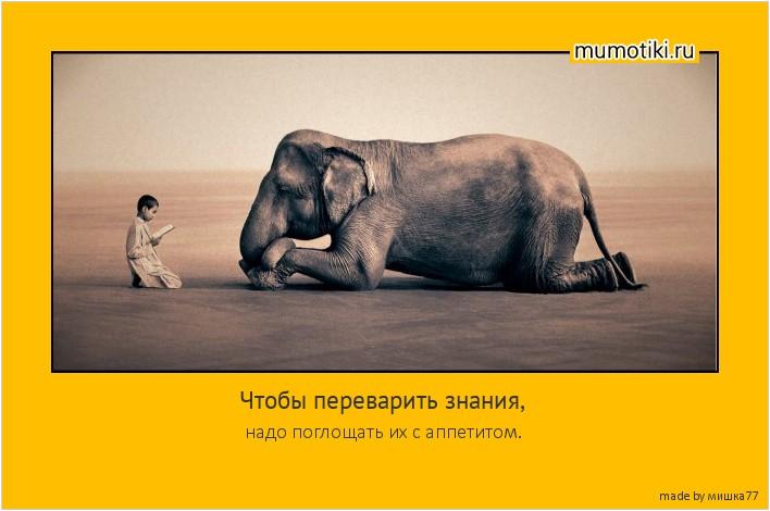 Чтобы переварить знания, надо поглощать их с аппетитом. #мотиватор