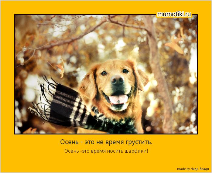 Осень - это не время грустить. Осень -это время носить шарфики! #мотиватор
