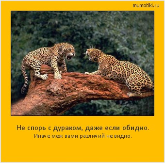 Не спорь с дураком, даже если обидно. Иначе меж вами различий не видно. #мотиватор