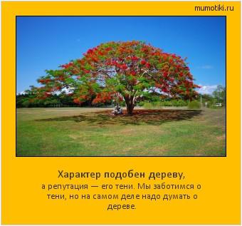 Характер подобен дереву, а репутация — его тени. Мы заботимся о тени, но на самом деле надо думать о дереве. #мотиватор