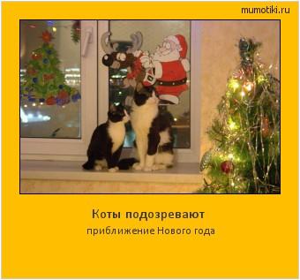 Коты подозревают приближение Нового года #мотиватор