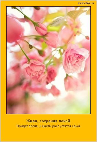 Живи, сохраняя покой. Придет весна, и цветы распустятся сами. #мотиватор