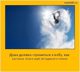 Душа должна стремиться к небу, как растение. Иначе ждёт её падение и тление. #мотиватор