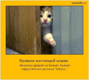 Правило настоящей кошки: Закрытых дверей не бывает. Бывает недостаточно громкое