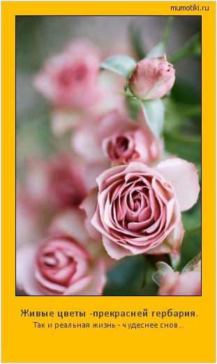 Живые цветы -прекрасней гербария. Так и реальная жизнь - чудеснее снов... #мотиватор