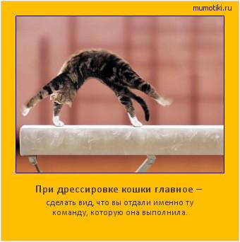 При дрессировке кошки главное – сделать вид, что вы отдали именно ту команду, которую она выполнила. #мотиватор