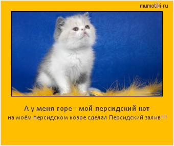 А у меня горе - мой персидский кот на моём персидском ковре сделал Персидский залив!!! #мотиватор