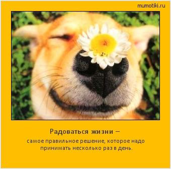 Радоваться жизни – самое правильное решение, которое надо принимать несколько раз в день. #мотиватор