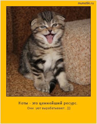 Коты - это ценнейший ресурс. Они уют вырабатывают...))) #мотиватор