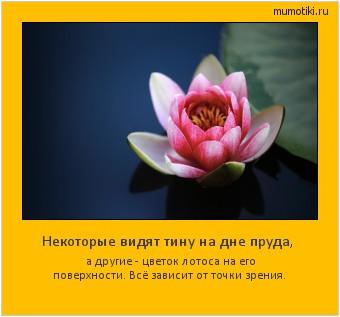 Некоторые видят тину на дне пруда, а другие - цветок лотоса на его поверхности. Всё зависит от точки зрения. #мотиватор