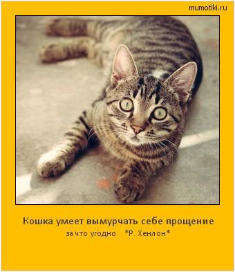 Кошка умеет вымурчать себе прощение за что угодно. *Р. Хенлон* #мотиватор
