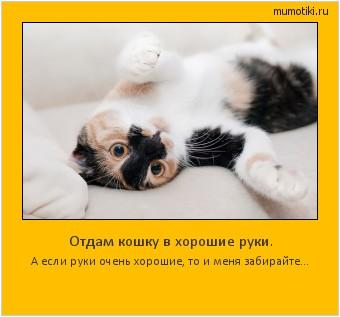 Отдам кошку в хорошие руки. А если руки очень хорошие, то и меня забирайте… #мотиватор