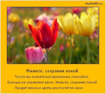 Живите, сохраняя покой. То,что вы можете воспринимать спокойно, больше не управляет вами. Живите, сохраняя покой. Придет весна,и цветы распустятся сами #мотиватор